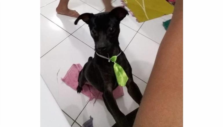 Cãozinho da raça Pinscher está desaparecido em Teixeira de Freitas; quem encontrar será bem gratificado