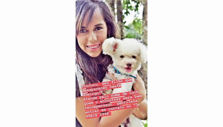 À procura de Luck: o cão da raça poodle está desaparecido desde domingo; quem encontrar será bem recompensado
