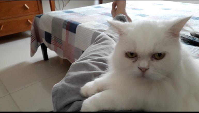Família procura por gato de estimação que desapareceu na madrugada desta segunda-feira em Teixeira; quem encontrar será recompensado