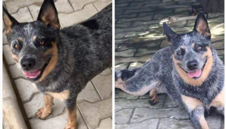Procura-se Maia! Cadela está desaparecida desde quinta-feira em Teixeira de Freitas; Ajude nessa causa!