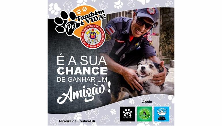 """18º GBM e ONGs lançam a campanha """"Pet também é vida!""""; saiba como ajudar"""